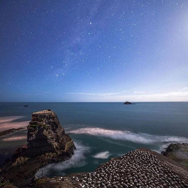 One of our favourite spot during our Auckland Day tour #Repost @nzherald (@get_repost) ・・・ Sleeping Gannets under the Milky Way, shot by @mrlesterchan 🙌🏼 #newzealand #nz #nzherald #photography #gannets
