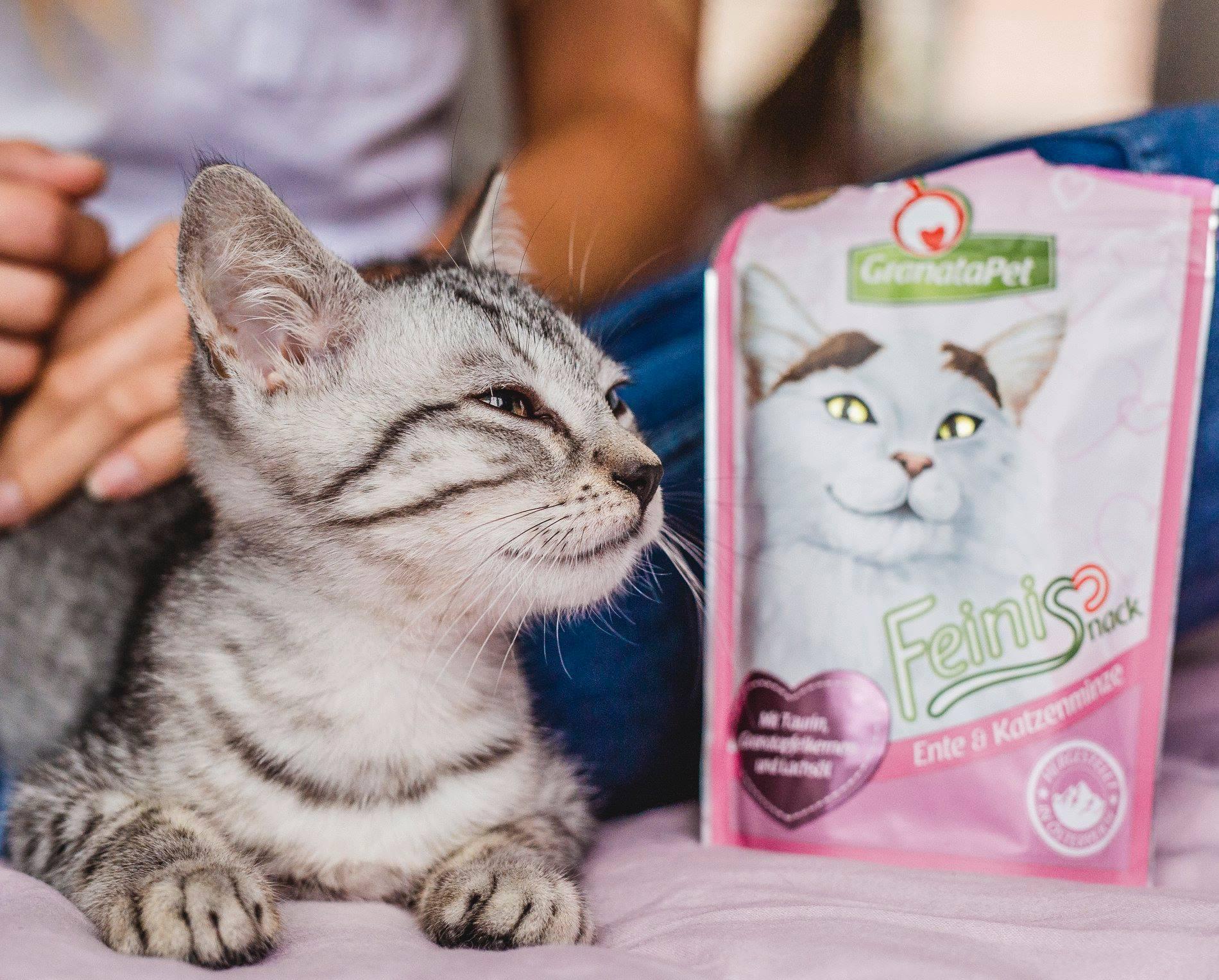 cat_feinis.jpg