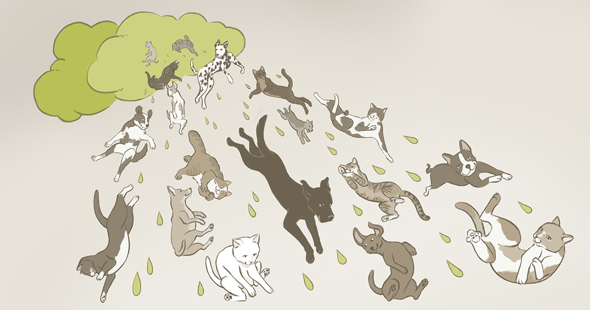 `It´s raining cats and dogs.`