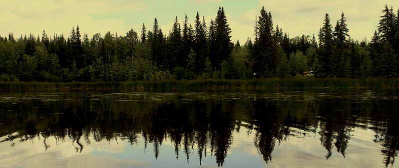 Boreal wetland reflections.