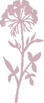blush icon.png