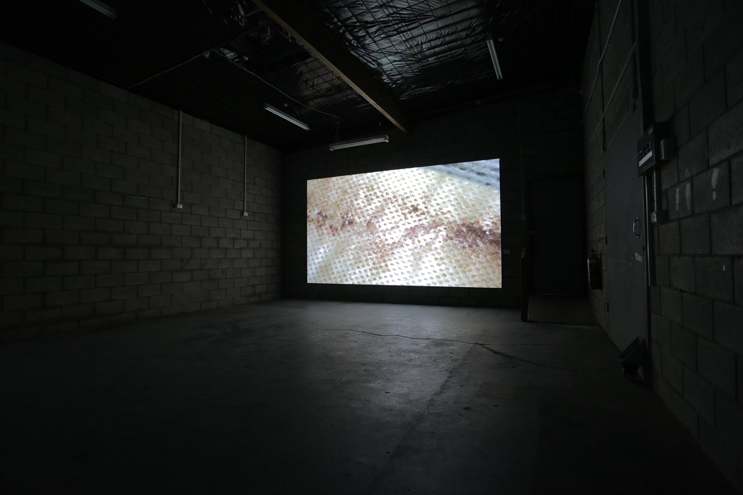 Bloodstain  2016, single channel HD digital video projection.  Photograph by Llewellyn Millhouse.