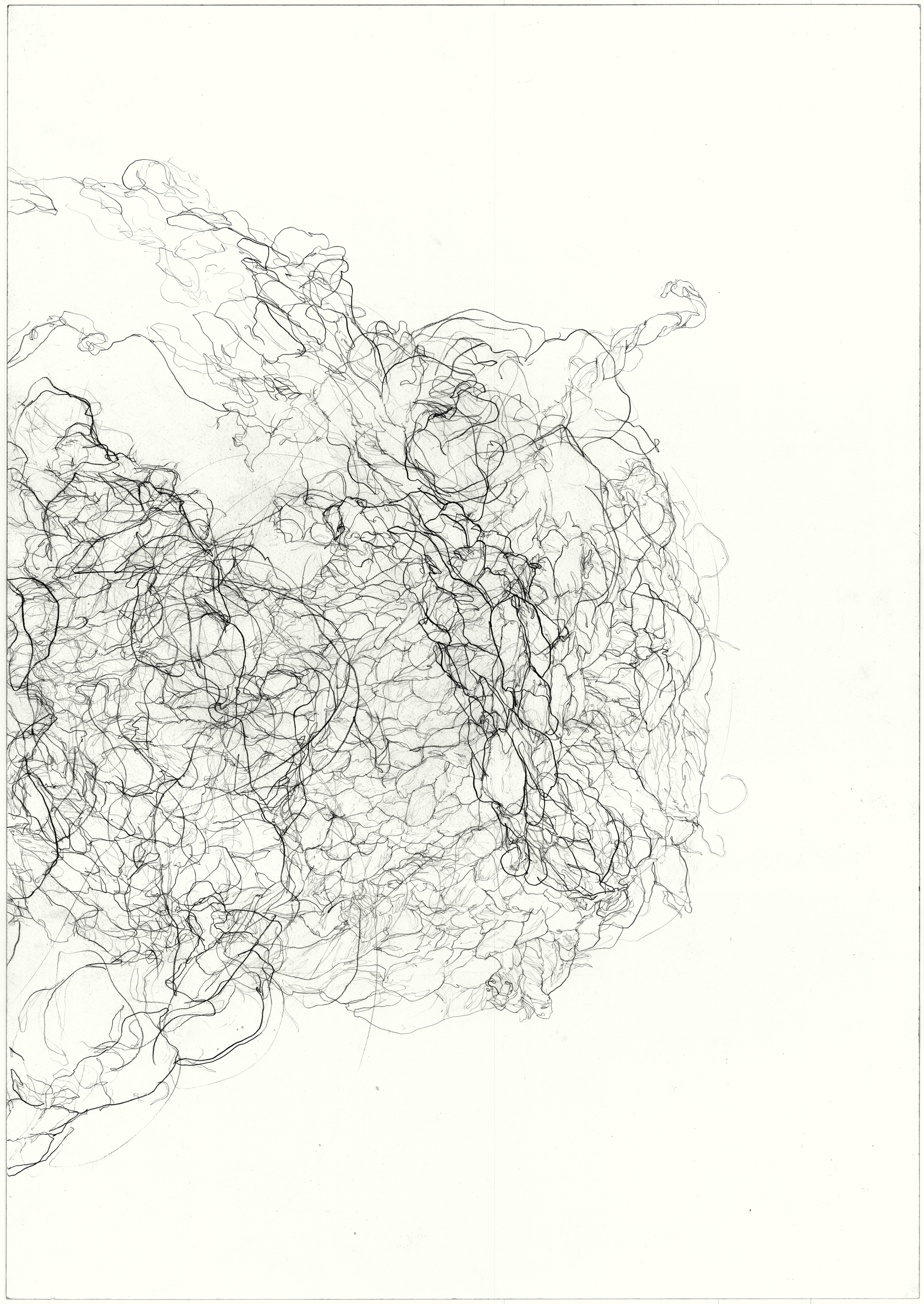 Strangle  2011, pencil on paper, 84.1 cm x 59.5 cm.