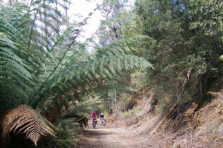 The Trail - Ready to take the next step? See the beautiful North East Tasmanian landscape you'll enjoy whilst part of the Rail Trail Run and Ride
