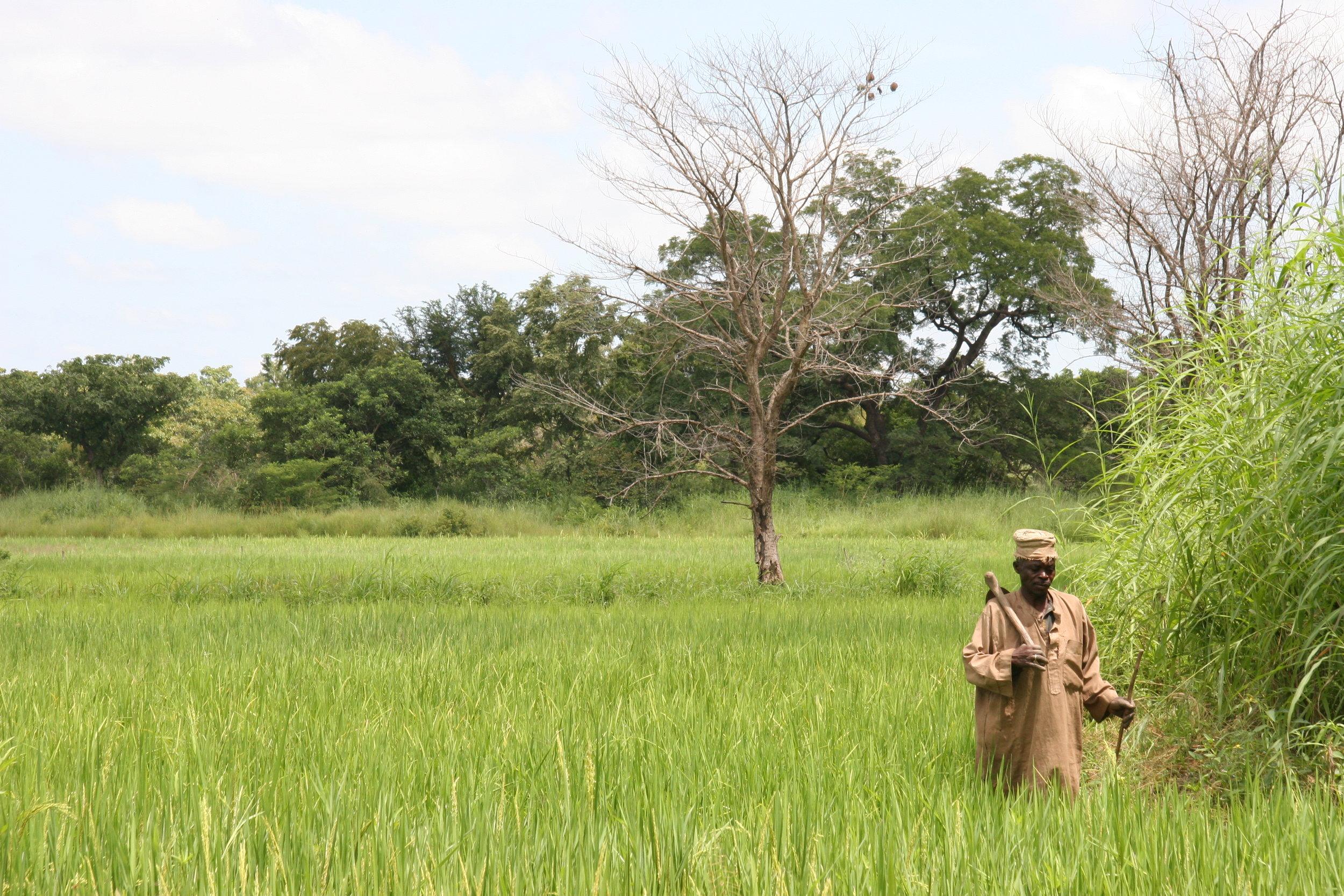 Benin 2009 308.jpg