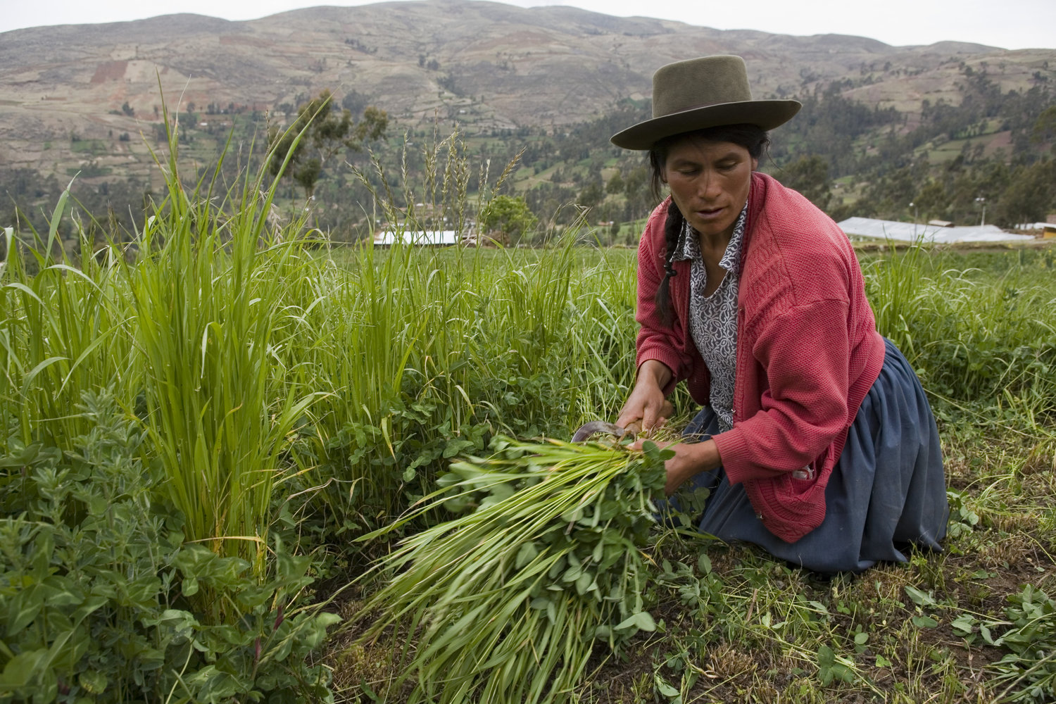 NES Peru - NES Peru has contributed to a greater understanding of the land issues facing Indigenous Peoples and has improved the reporting and monitoring of public institutions.