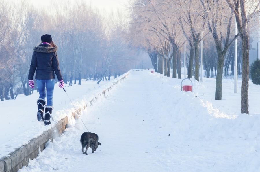 Winter-Walks.jpg