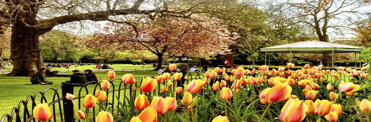 ireland-spring-1.jpg