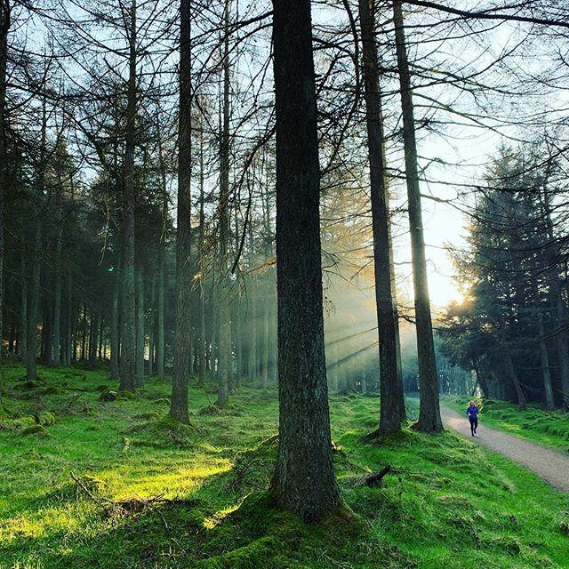 crugh woods.jpg