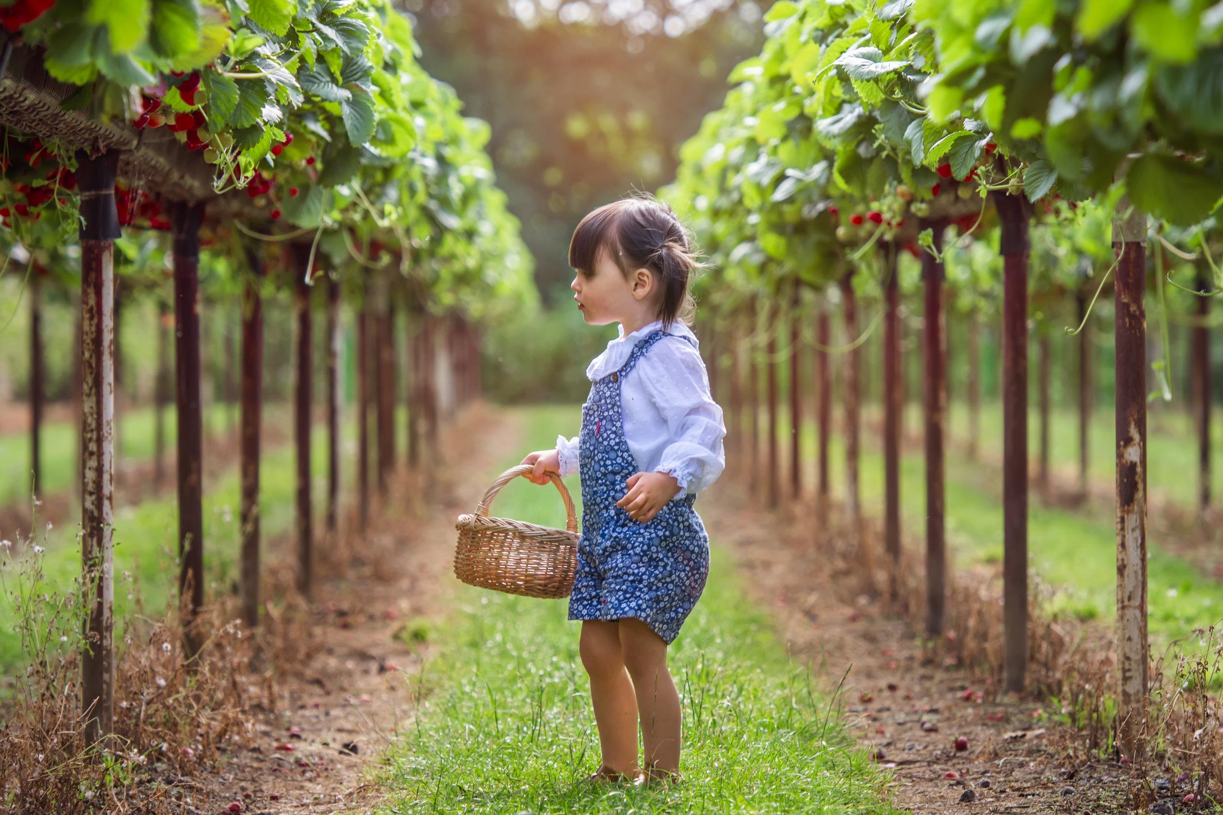 strawberry_picking_cammas_hall_farm.jpg