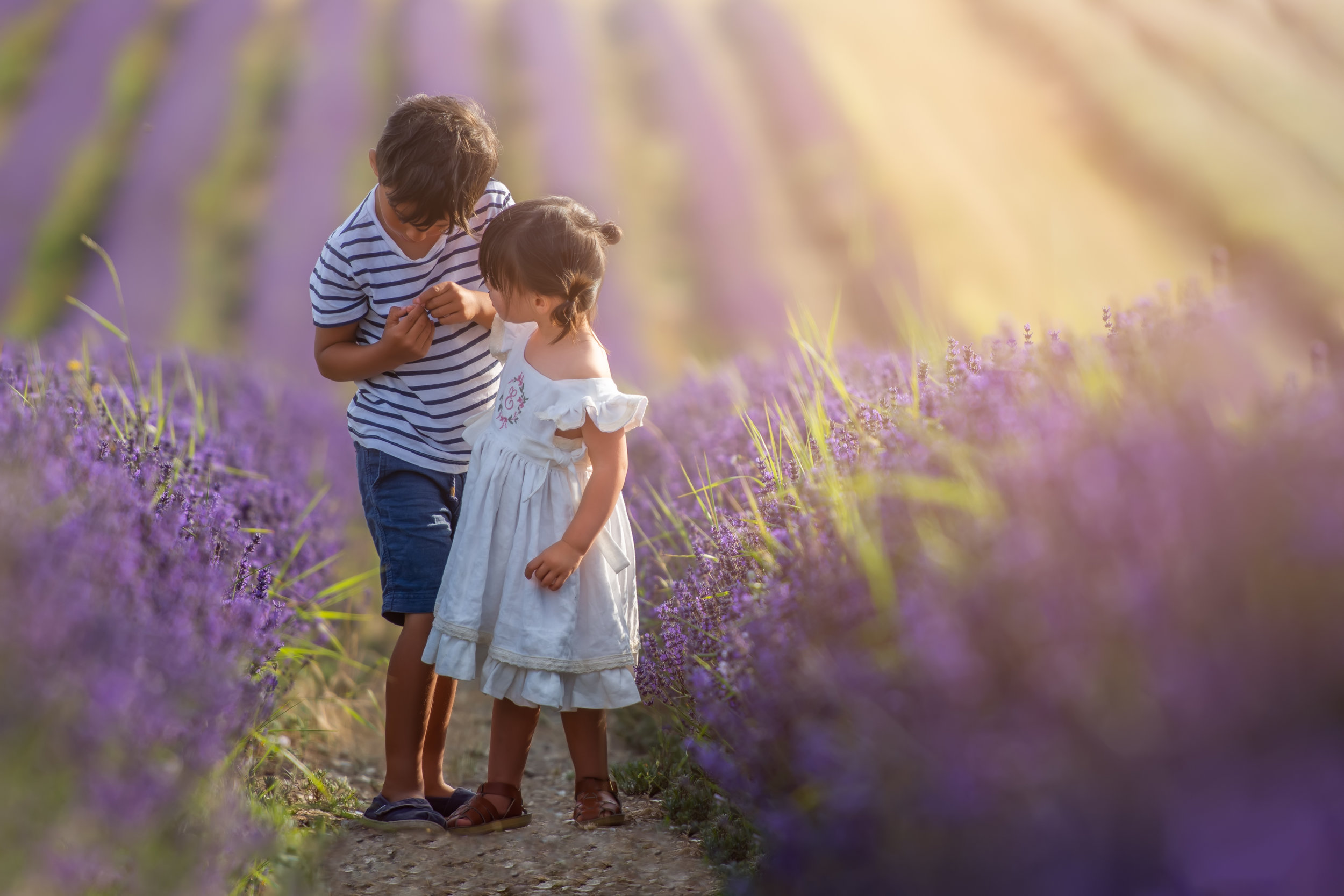 hitchin_lavender.jpg