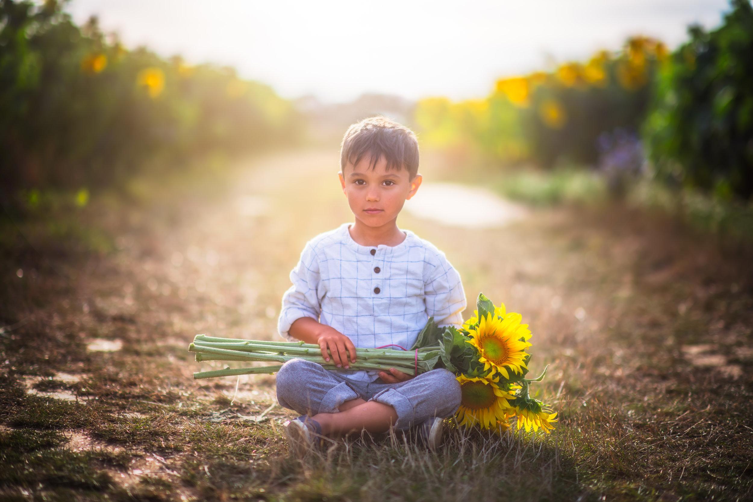 Hertfordshire_sunflowers.jpg