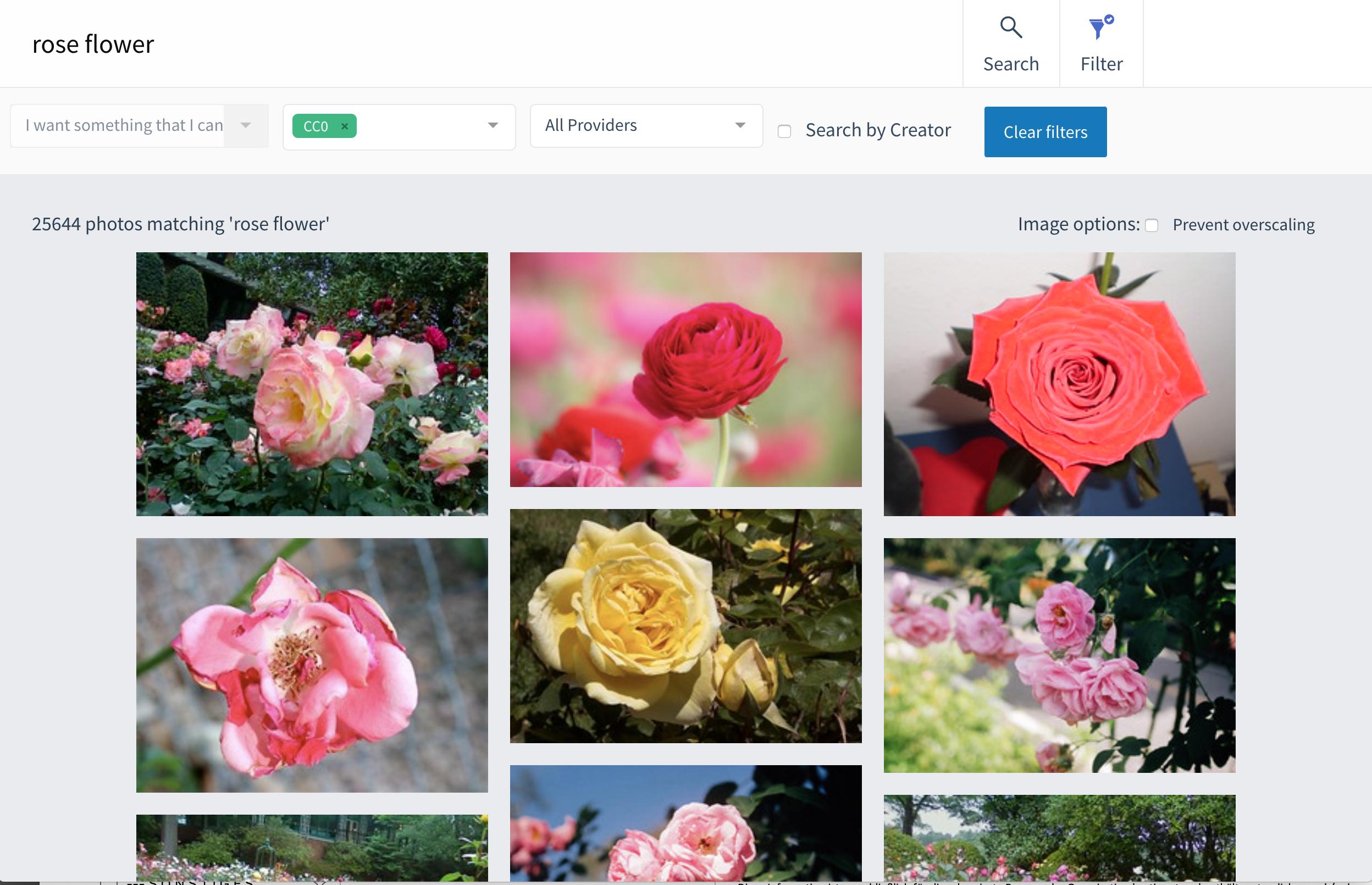 """Beispiel für das Ergebnis einer Suche nach """"rose flower"""" unter Verzicht auf alle urheberrechtlichen und verwandten Schutzrechte"""