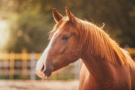 horse_LO.jpg