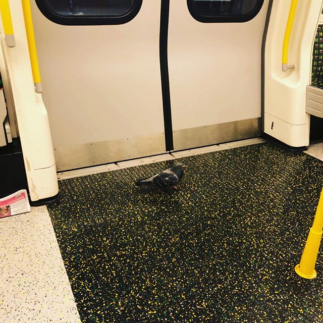 You get all sorts on the tube late at night... #london #tube #travels #travelcompanion