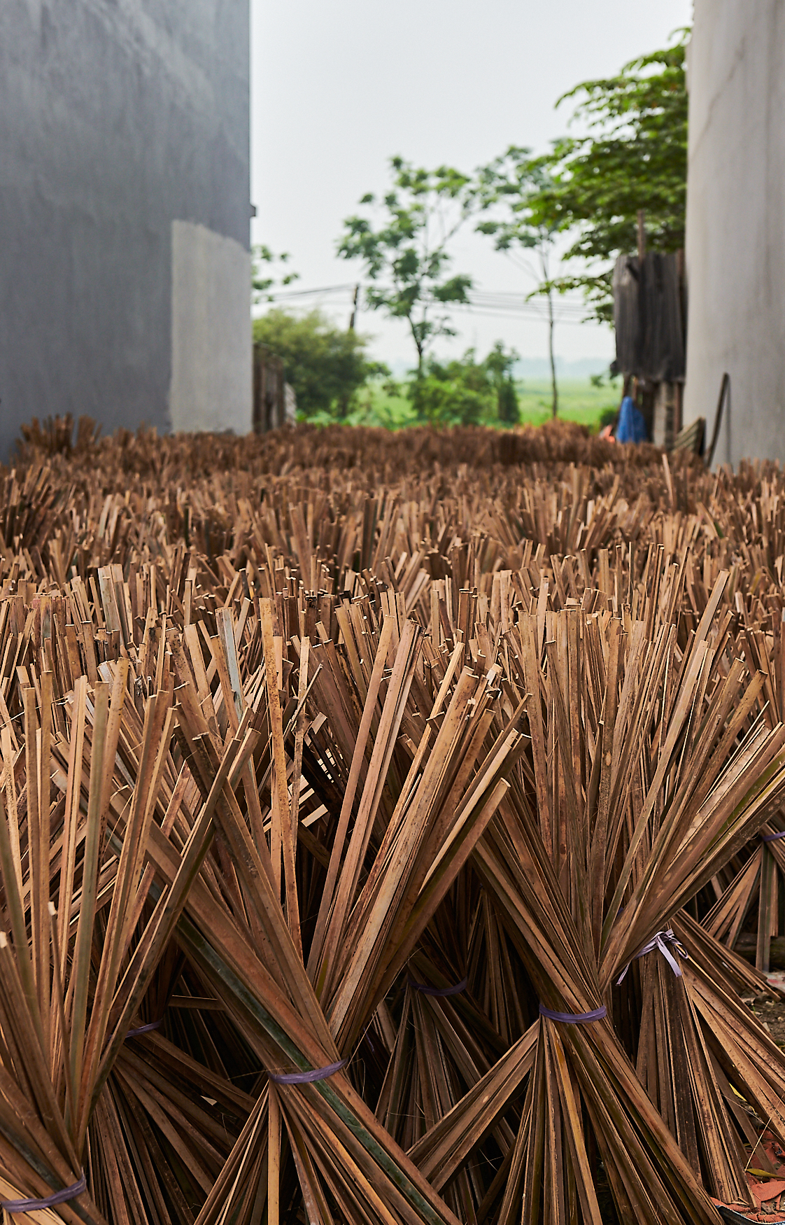Stage 1 cut bamboo sticks drying in the sun prior to processing