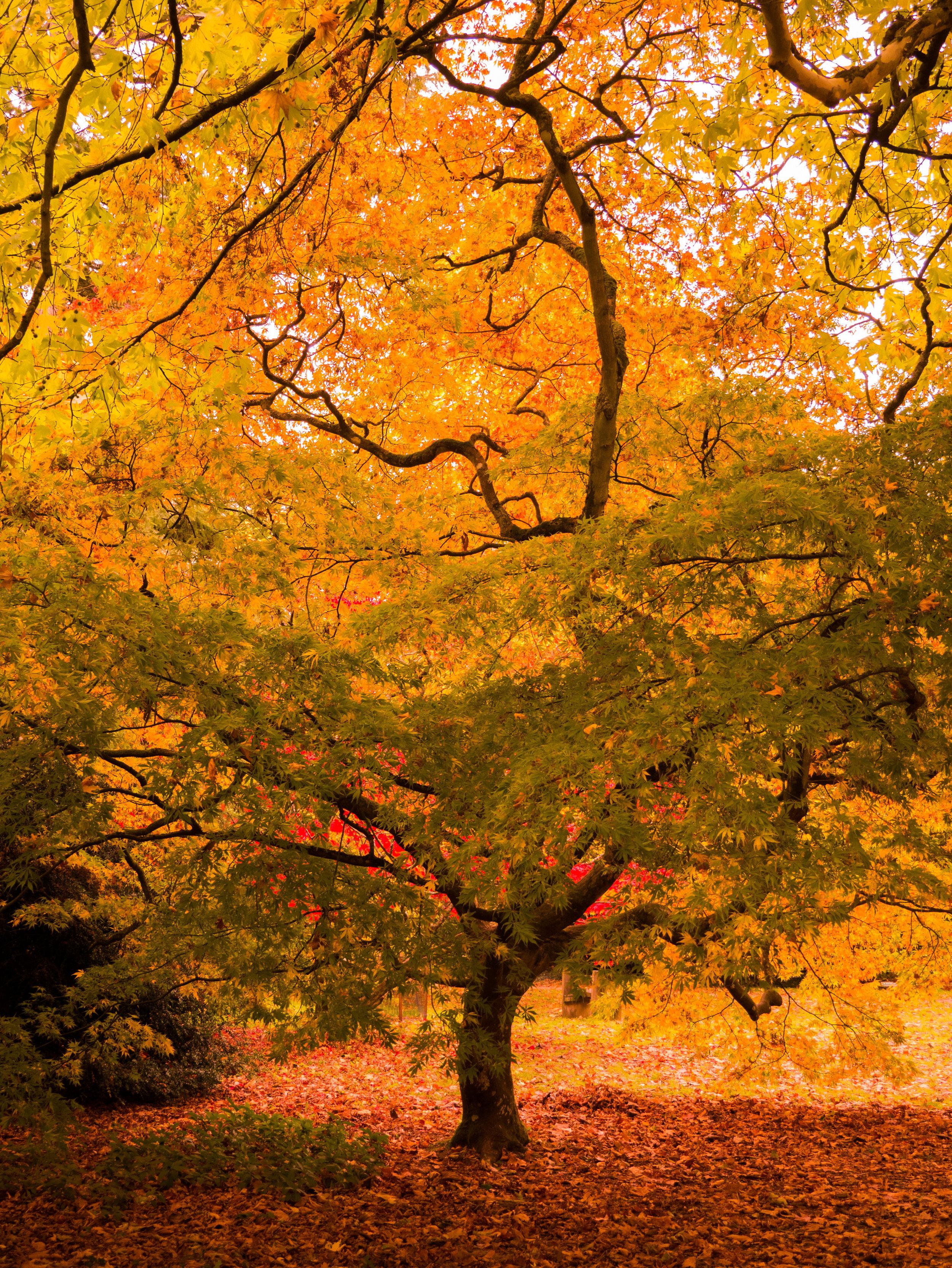 Amazing fall colors.