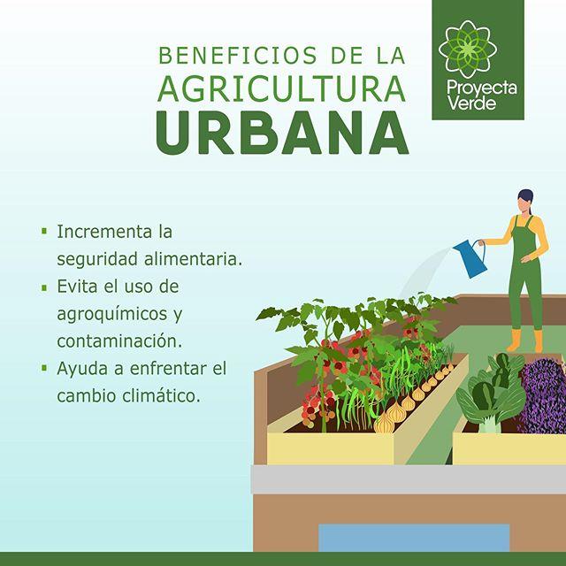 La agricultura urbana contribuye de forma positiva al ambiente🌍, aporta en el ámbito social🗣, ecológico🌳 y económico📊. Conoce algunos beneficios ☝🏽 #PorUnGuayaquilMásVerde