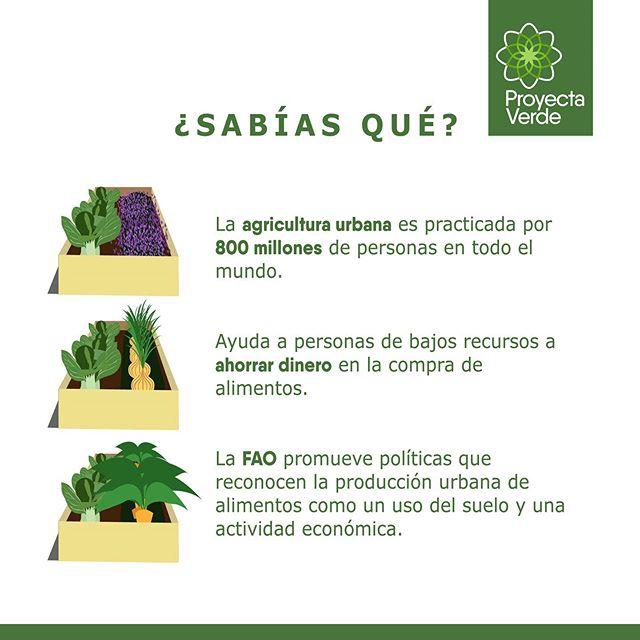 La Agricultura Urbana es un gran aporte para fortalecer la resilencia de las ciudades 🌳 Te compartimos algunos datos ☝🏽#PorUnGuayaquilMásVerde