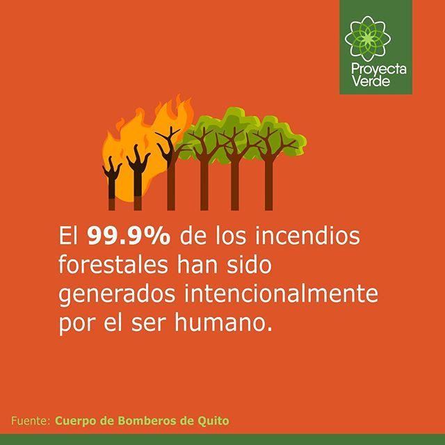 Si vas a visitar bosques o zonas de terreno forestal o silvestre🌳, es importante recordar que: ❌Un solo palillo de fósforo puede incendiar el bosque🔥 ⚠️Y si ya iniciaste una fogata, antes de dejar el área, apaga el fuego cuidadosamente, con agua y tierra💧