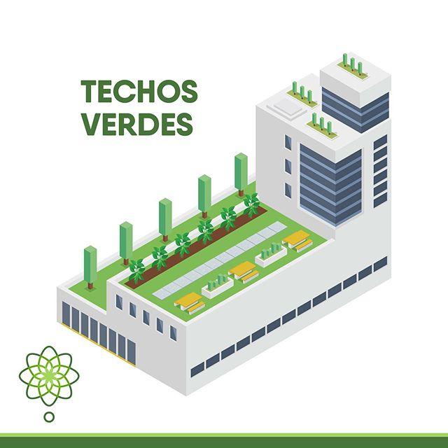 El techo verde es una superficie cubierta de vegetación que brinda beneficios al ambiente urbano de la ciudad🍃 Esta área se ubica en la parte superior de las edificaciones🏢🌺y cuenta con diferentes capas protectoras e impermeabilizantes que permiten la siembra de especies vegetales, sin dañar la edificación🌿
