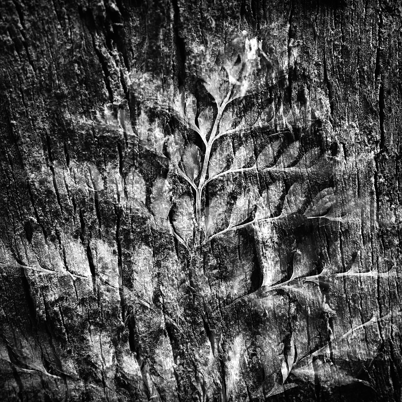 Fern over tree bark