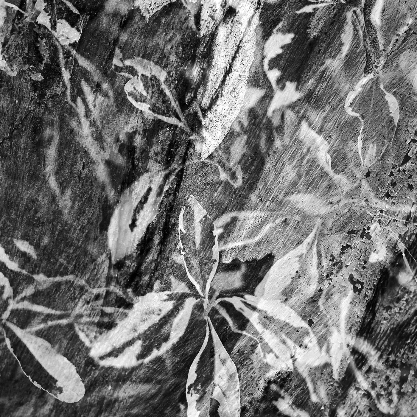Leaves over Eucalyptus bark