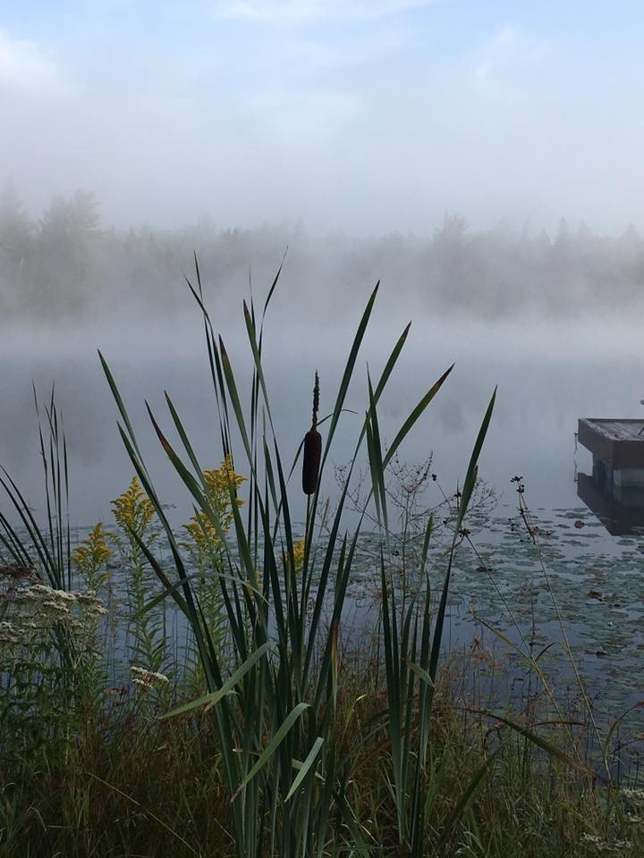 Line-Foggy Lake Cattails.jpg