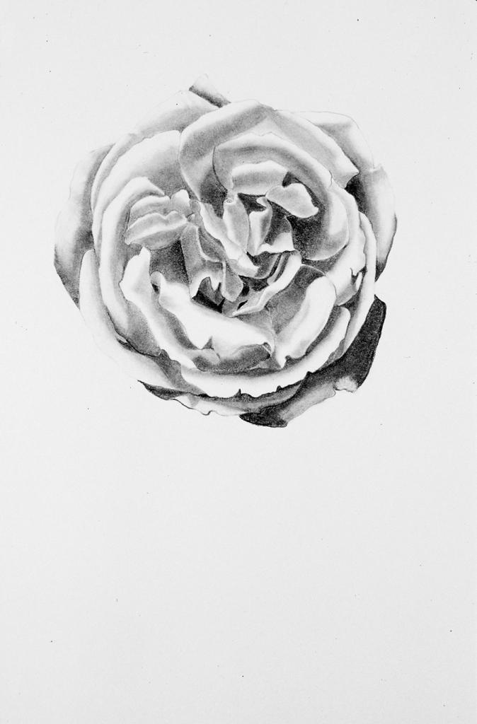 Drawing of Single Rose@1991 Sandra Sallin