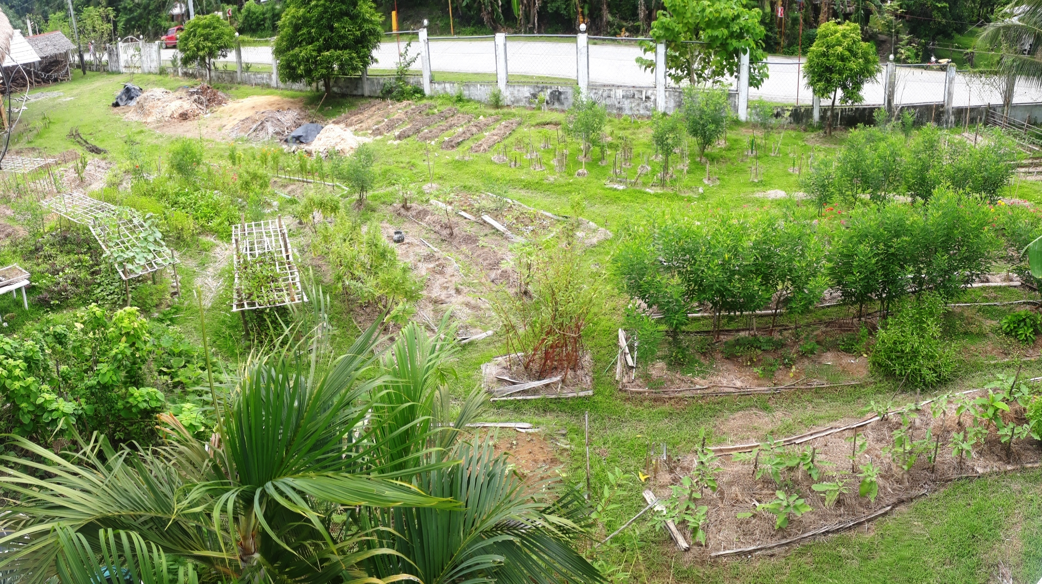 A bird's eye view of one section of our permaculture farm