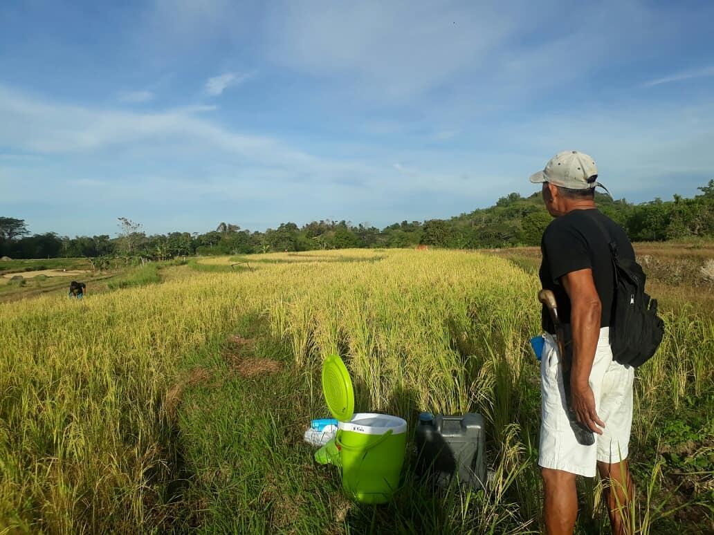 Organic SRI Rice