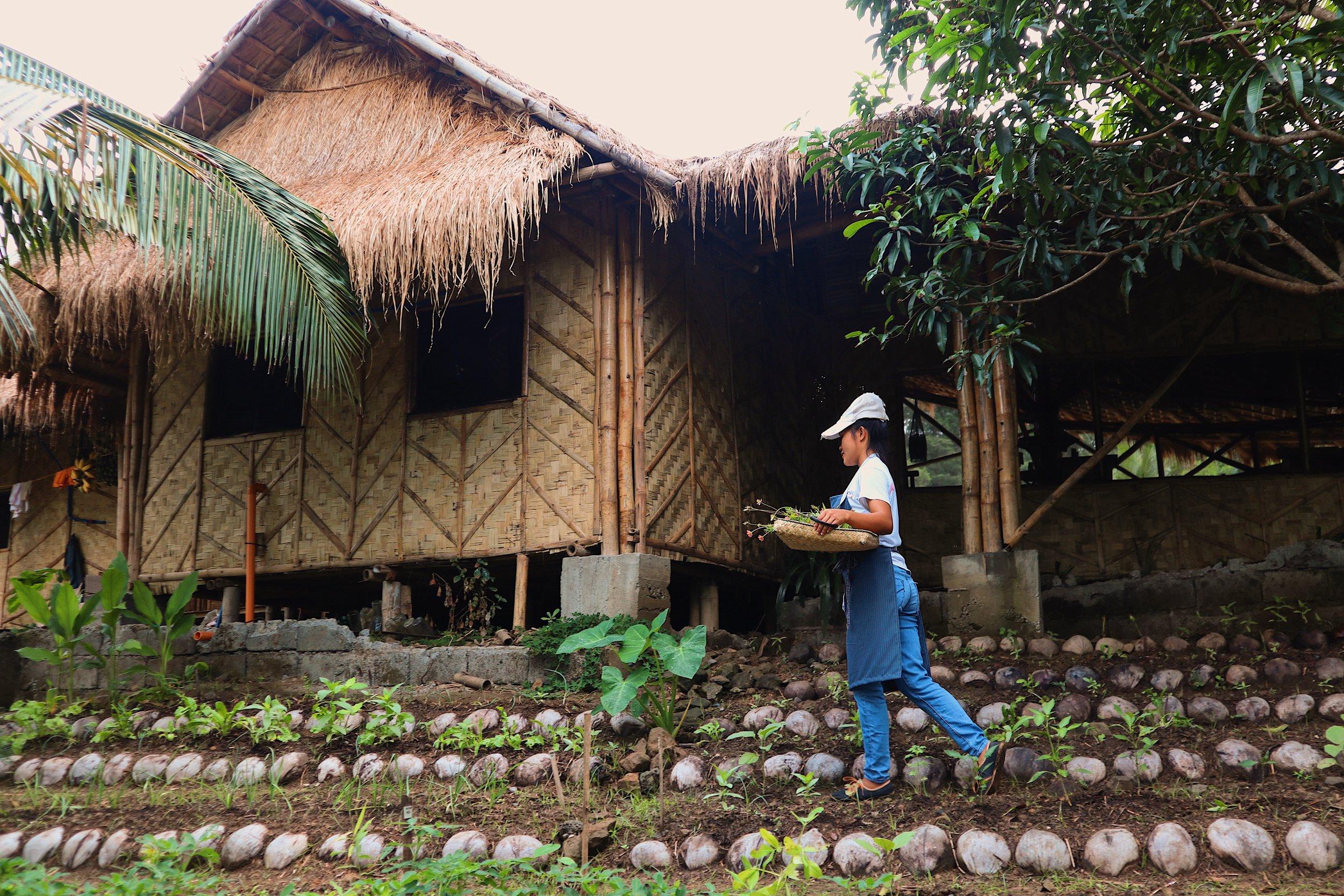 Organic Garden Harvests