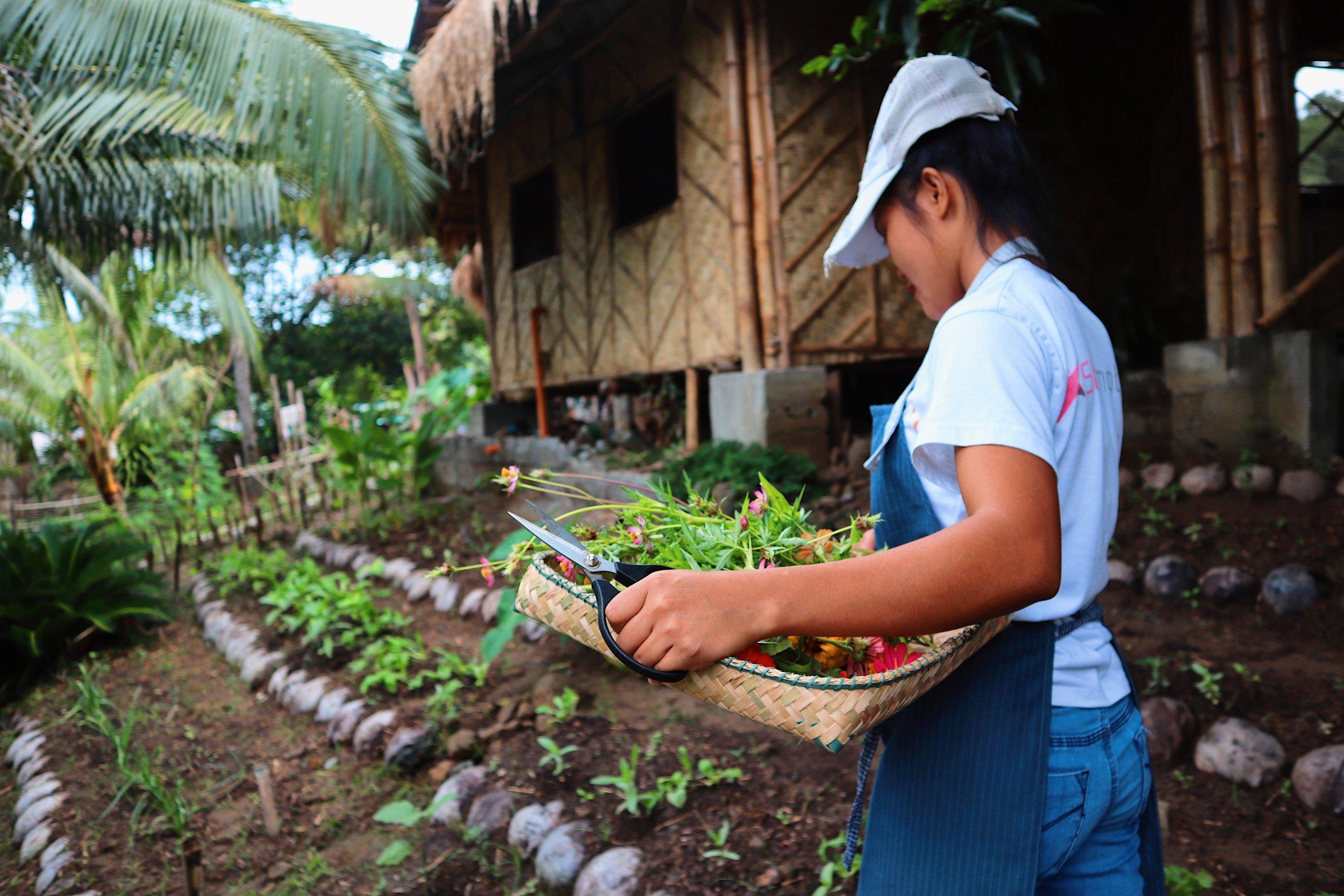 Daily Garden Harvests