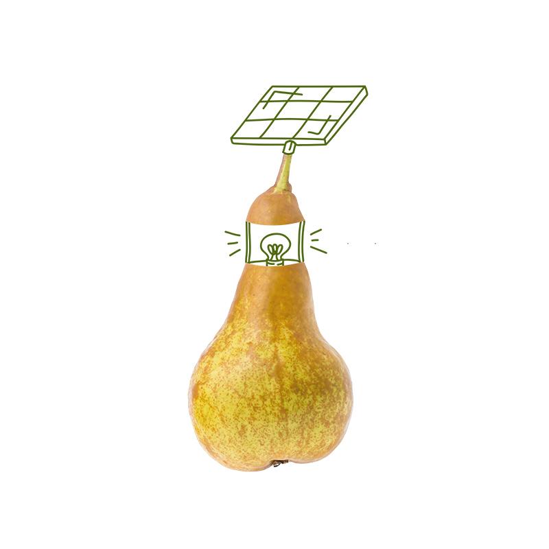 JI1718_illu_pear.jpg