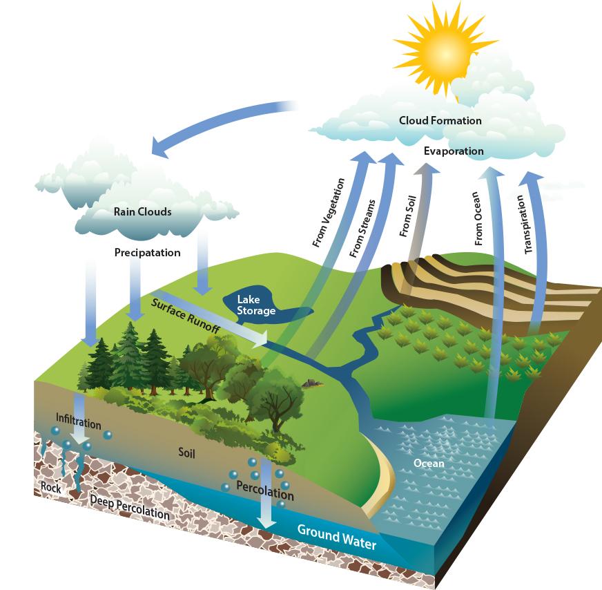 hydrologic-cycle.jpg