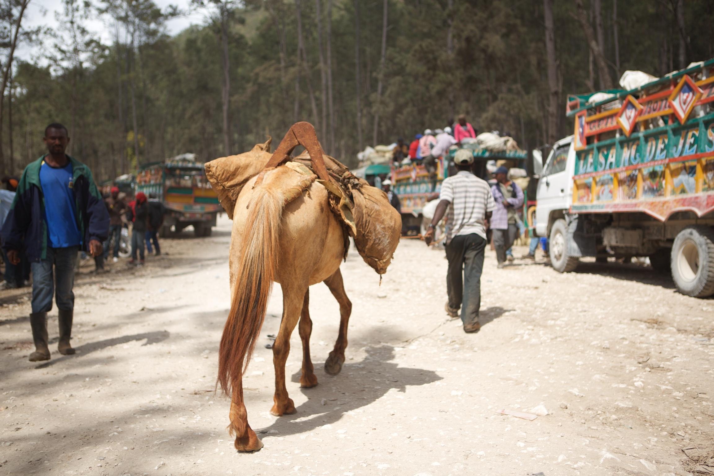 man leading horse on dirt road alongside trucks