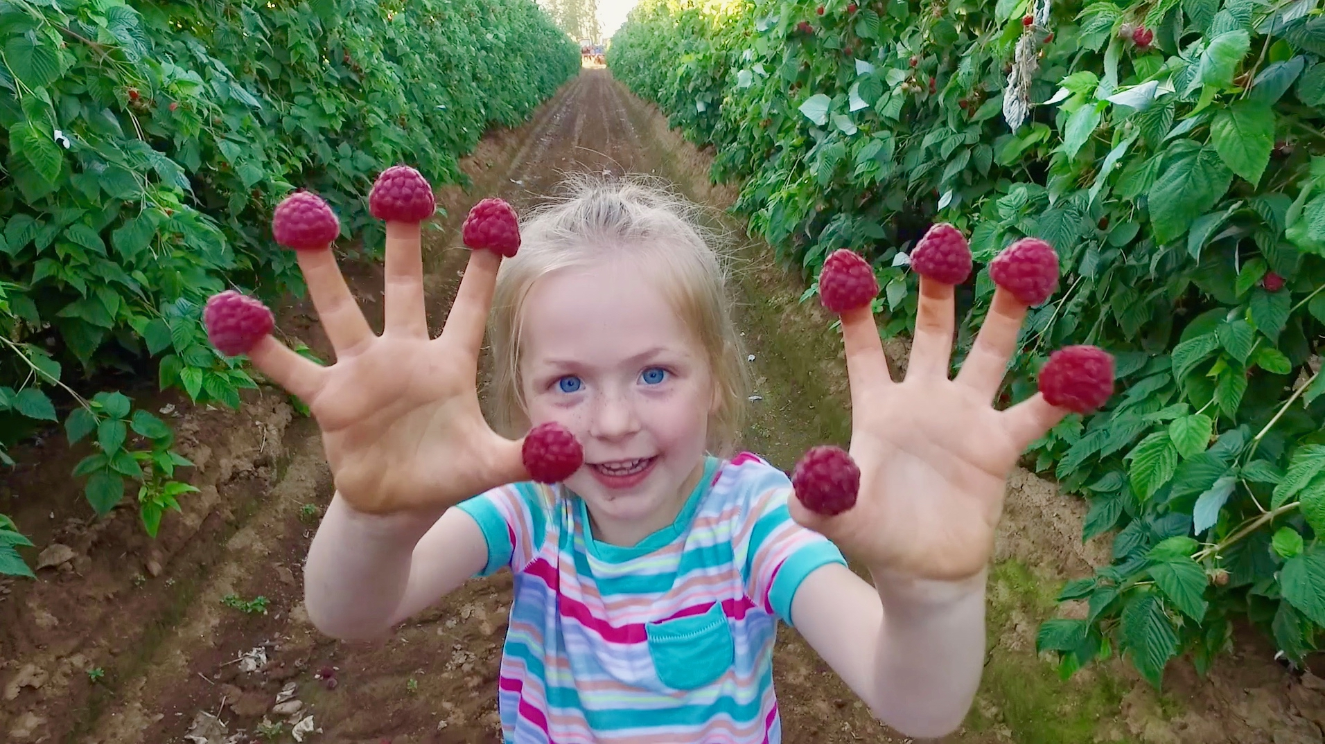 young girl with raspberries on fingers in raspberry field