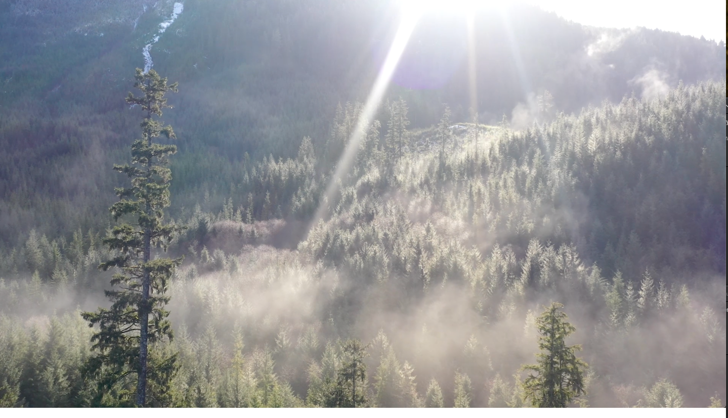 The first Episode in the 3 movies we made for Sealaska is about how they have sequestered 165,000 acres of forest in a carbon bank for the benefit of their people, the land, and the earths lungs. Watch this powerful movie here  www.sealaska.com