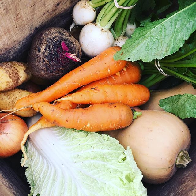 Donate $25 to GFFH and get your chance to win a free Fall CSA share from @gardenatlibertyfarms (valued at $170)! Just think about all those delicious hearty root and storage vegetables! Use the link in our bio to learn more and make a donation today. Winner will be announced on October 15.