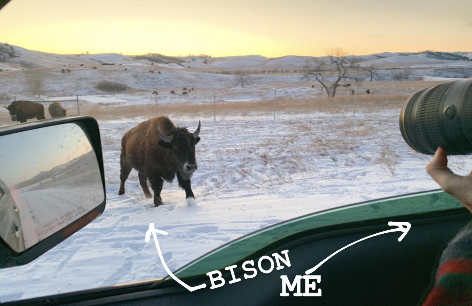 kcresto-with-bison.jpeg