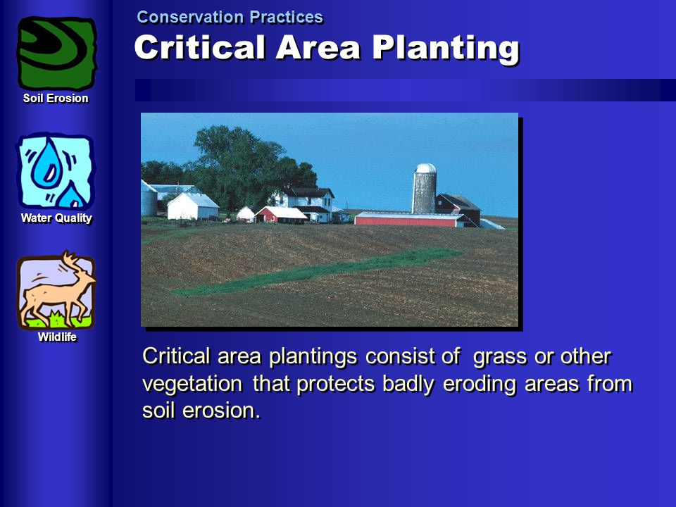 Critical+Area+Planting (1).jpg