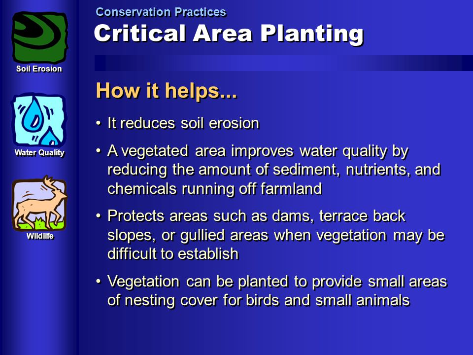 Critical+Area+Planting.jpg
