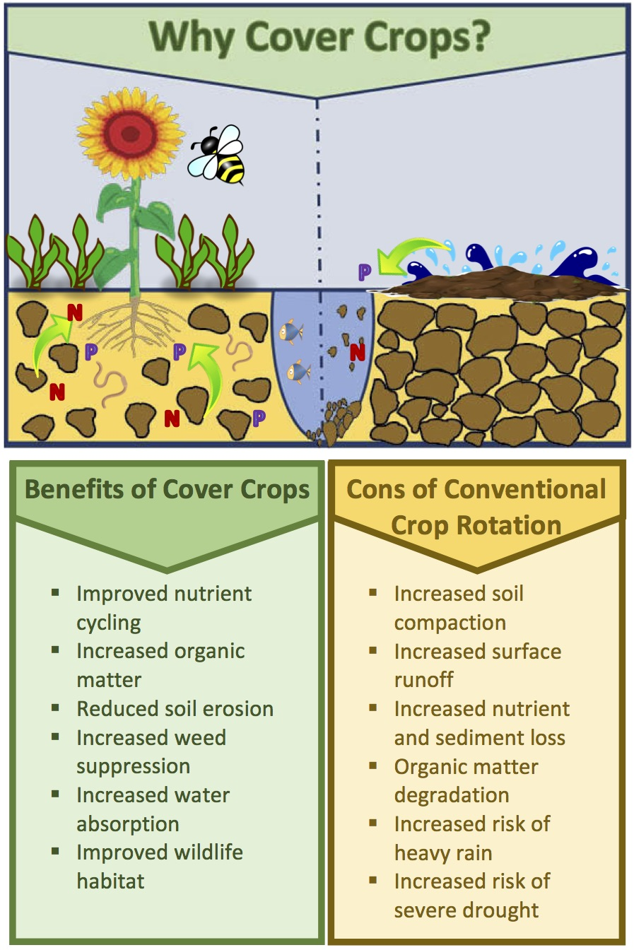 Why-Cover-Crops_v4.jpg