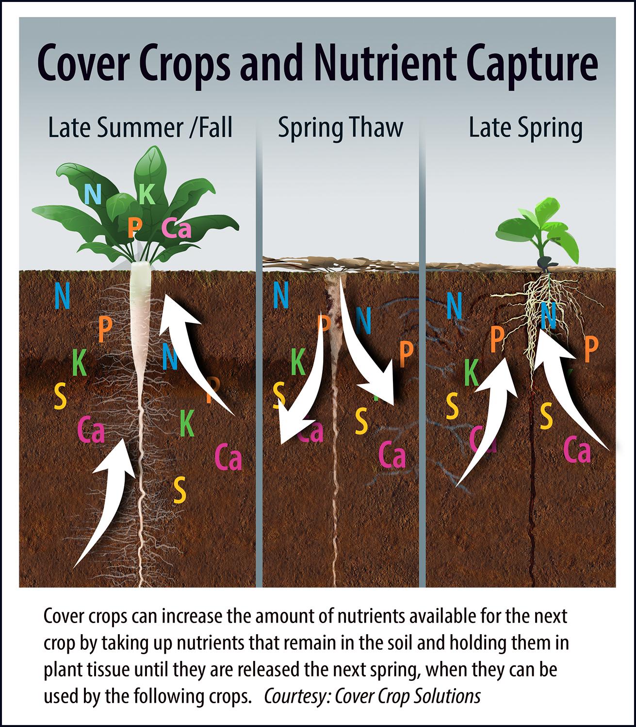 Cover Crop Nutrients.jpg