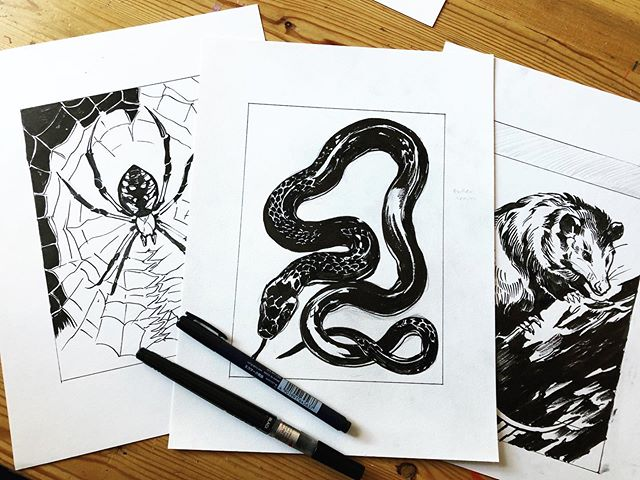 Happy #inktober2019! I've been working on a project I've had in mind for a while now, a set of 4 block prints featuring under-appreciated wildlife native to my area that are largely beneficial to humans. Still working out the sketches, I'll keep you posted on my progress and where/when they'll be for sale! . #art #artistsoninstagram #myart #inktober2019 #inktober #ink #bw #blackandwhite #drawing #nature #natureart #wip #progress #progresspic #spider #spiderweb #snake #opossum