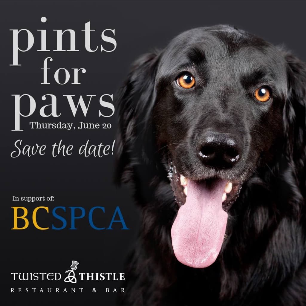twisted thistle restaurant pints for paws