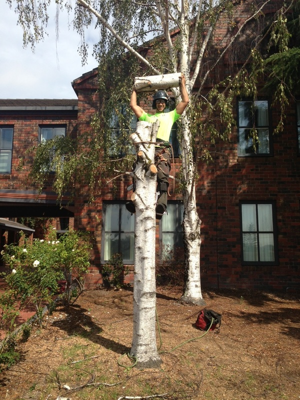 TREE REMOVAL - It's what we do.