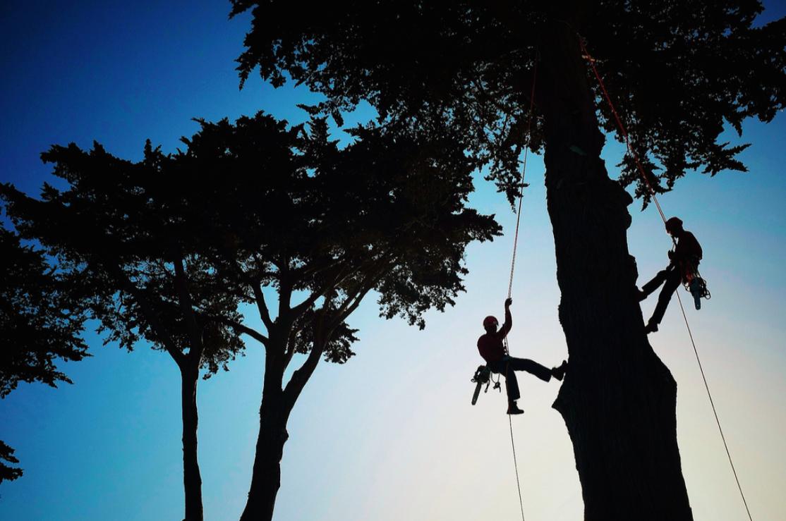 Tree Removals -