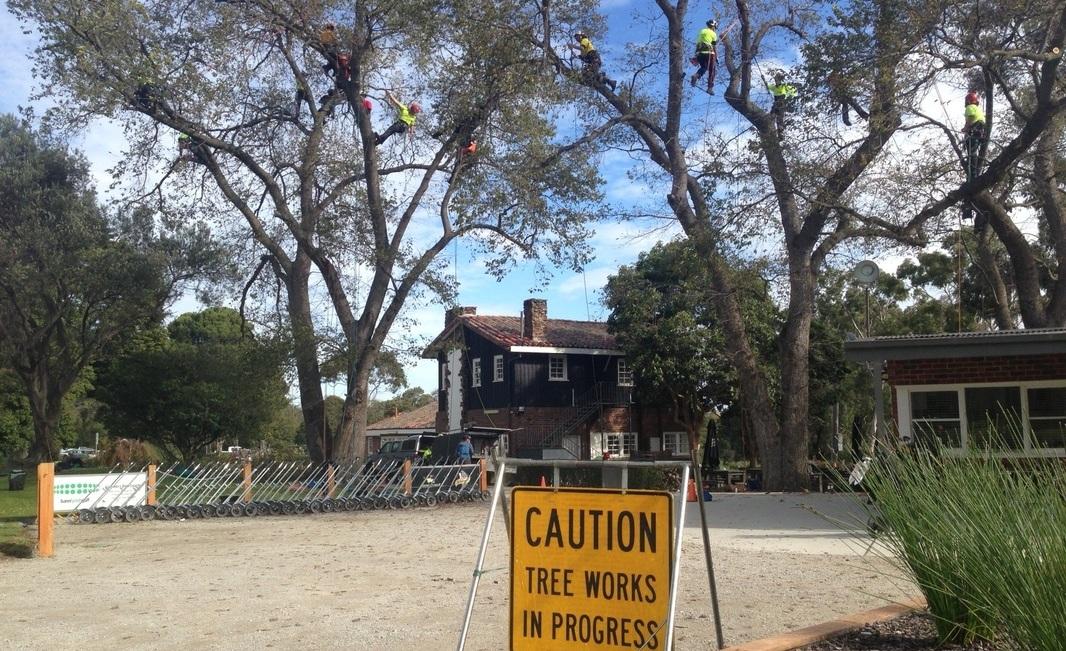 TREE PRUNING -