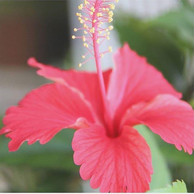 Hello Mai 🌺 Bonne fête du travail !  #mai #fetedutravail #flowers #fleur #hibiscus #happy #hello #dynasteabox